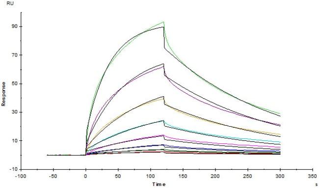 ACROBiosystems100UG Mouse Fc gamma RI / CD64 Protein  Produkte