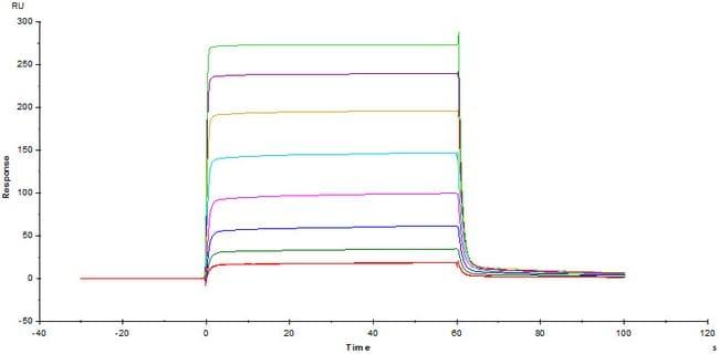 ACROBiosystemsBiotinylated Human Fc gamma RIIA / CD32a (H167) Protein, Avitag™,His Tag (SPR & BLI verified) 200 ug ACROBiosystemsBiotinylated Human Fc gamma RIIA / CD32a (H167) Protein, Avitag™,His Tag (SPR & BLI verified)