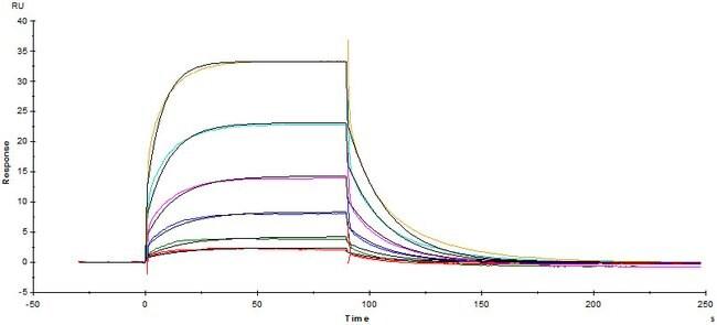 ACROBiosystems25UG Biotinylated Human Fc gamma RIIIA / CD16a (F176), Avi Tag (Avitag)  Produkte