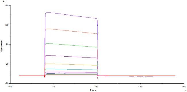 ACROBiosystemsHuman Fc gamma RIIB / CD32b Protein, His Tag 1 mg ACROBiosystemsHuman Fc gamma RIIB / CD32b Protein, His Tag