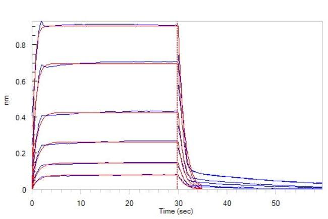 ACROBiosystems25ug Biotinylated Human Fc gamma RIIB / CD32b Protein, Avitag,His Tag (SPR & BLI verified)  Produkte