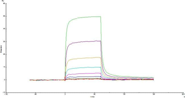 ACROBiosystemsHuman CD3 epsilon&CD3 gamma Heterodimer Protein, Fc,His Tag&Fc,Flag Tag 1 mg ACROBiosystemsHuman CD3 epsilon&CD3 gamma Heterodimer Protein, Fc,His Tag&Fc,Flag Tag