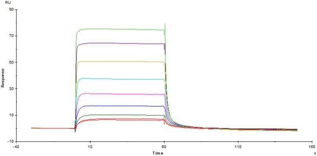 ACROBiosystemsBiotinylated Human FcRn / FCGRT&B2M Heterodimer Protein, Avitag™,His Tag&Strep II Tag (SPR & BLI verified) 200 ug ACROBiosystemsBiotinylated Human FcRn / FCGRT&B2M Heterodimer Protein, Avitag™,His Tag&Strep II Tag (SPR & BLI verified)