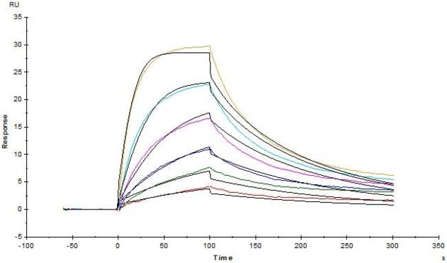 ACROBiosystemsBiotinylated Rat FcRn / FCGRT&B2M Heterodimer Protein, Avitag™,His Tag&Strep II Tag (SPR verified) 200 ug ACROBiosystemsBiotinylated Rat FcRn / FCGRT&B2M Heterodimer Protein, Avitag™,His Tag&Strep II Tag (SPR verified)