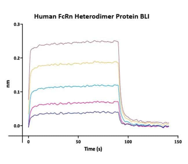 ACROBiosystems Biotinylated Human Her2 / ErbB2 Protein, His Tag, ultra sensitivity (primary amine labeling, long spacer) 25 ug ACROBiosystems Biotinylated Human Her2 / ErbB2 Protein, His Tag, ultra sensitivity (primary amine labeling, long spacer)