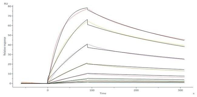 ACROBiosystems100ug Human IL-23 R Protein, His Tag(SPR verified)  Produkte