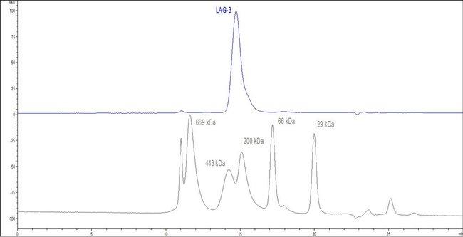 ACROBiosystemsHuman LAG3 / CD223 Protein, Fc Tag 100 ug ACROBiosystemsHuman LAG3 / CD223 Protein, Fc Tag