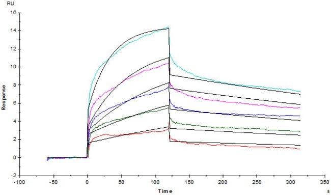 ACROBiosystemsHuman LILRB4 / CD85k / ILT3 Protein, Fc Tag 50 ug ACROBiosystemsHuman LILRB4 / CD85k / ILT3 Protein, Fc Tag
