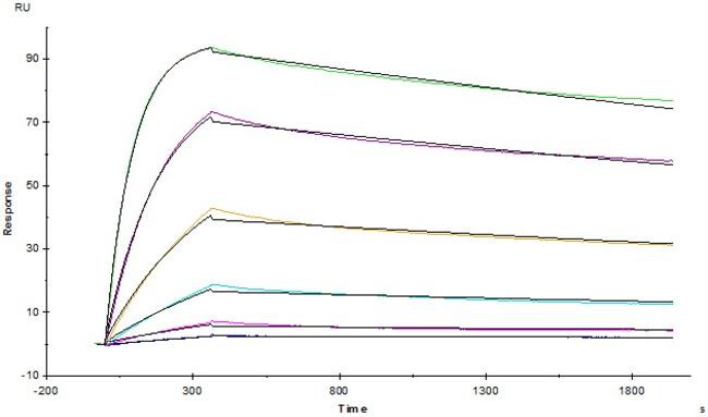 ACROBiosystemsHuman TNF-alpha Protein, His Tag (active trimer) 100 ug ACROBiosystemsHuman TNF-alpha Protein, His Tag (active trimer)