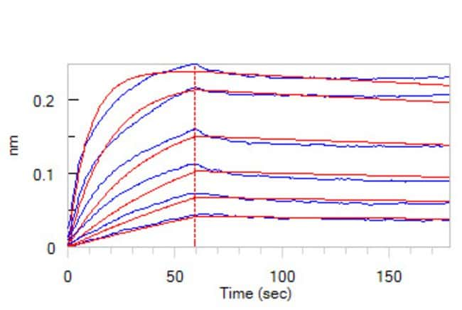 ACROBiosystemsHuman Osteoprotegerin / TNFRSF11B Protein, His Tag 100 ug ACROBiosystemsHuman Osteoprotegerin / TNFRSF11B Protein, His Tag