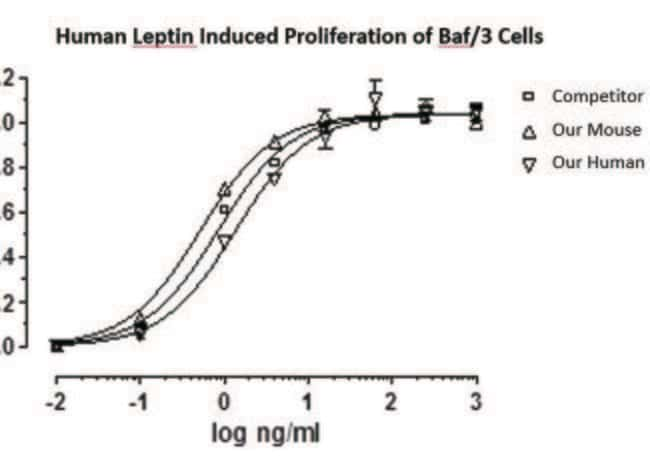 enQuireBio™Recombinant Human Leptin Protein 10mg enQuireBio™Recombinant Human Leptin Protein
