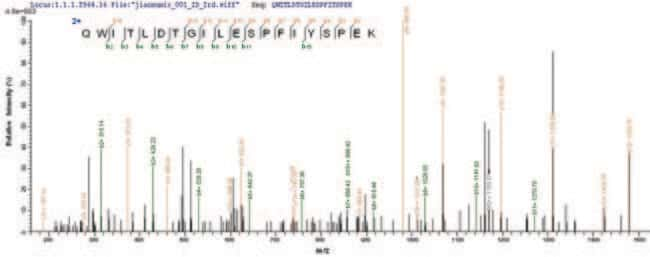 enQuireBio™Recombinant Human Rhomboid-related protein 1 1mg enQuireBio™Recombinant Human Rhomboid-related protein 1