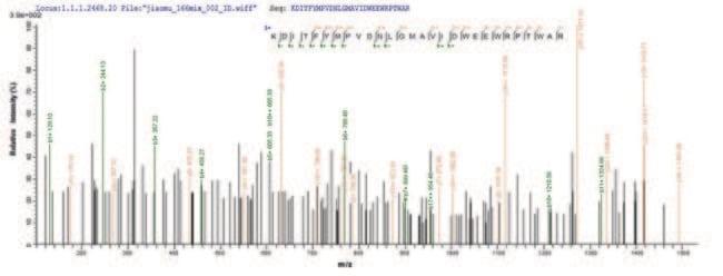 enQuireBio™Recombinant Human Hyaluronidase PH-20 Protein 200μg enQuireBio™Recombinant Human Hyaluronidase PH-20 Protein