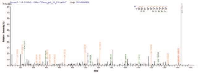 enQuireBio™ Recombinant Human p53 / TP53 Protein 1mg enQuireBio™ Recombinant Human p53 / TP53 Protein