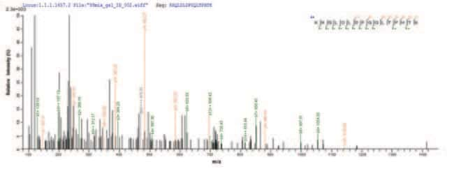 enQuireBio™Recombinant Epstein-Barr Envelope glycoprotein GP350 Protein 50μg enQuireBio™Recombinant Epstein-Barr Envelope glycoprotein GP350 Protein
