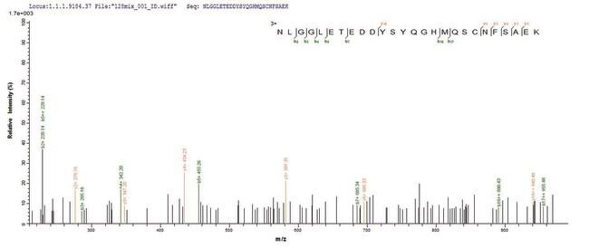 enQuireBio™Recombinant Human Cathepsin F Protein 500μg enQuireBio™Recombinant Human Cathepsin F Protein