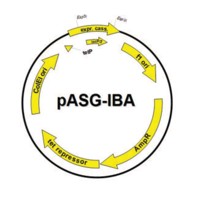 IBA GmbH™ E. coli Expression Vector with Secretion Vector: pASG-IBAwt2 produits trouvés