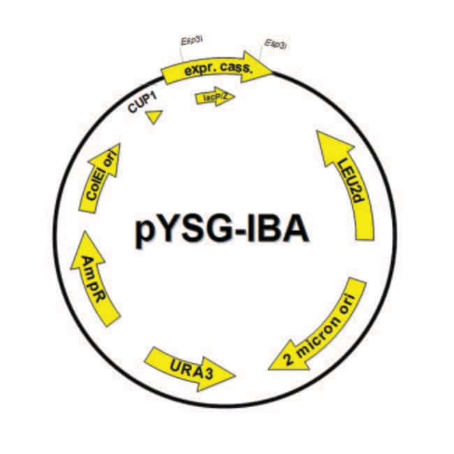 IBA Solutions For Life Science StarGate™ pYSG-IBA Acceptor Vectors for Yeast Expression Stargate pYSG Acceptor Vector: pYSG-IBA143; 6xHistidine-tag for N-terminal and Twin-Strep-tag™ for C-terminal produits trouvés