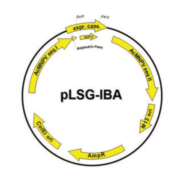 IBA Lifesciences™Vecteurs accepteurspLSG-IBA StarGate™ pour Baculo Vecteur accepteur StargatepLSG: pLSG-IBA104; inclut signal BM40, pUCori, résistance à l'ampicilline; Twin-Strep-tag™ pour extrémité N-terminale voir les résultats