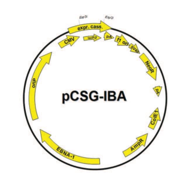 IBA GmbH™Säugetier-Expressionsvektor ohne Absonderung Vektor: pCSG-IBA103 IBA GmbH™Säugetier-Expressionsvektor ohne Absonderung