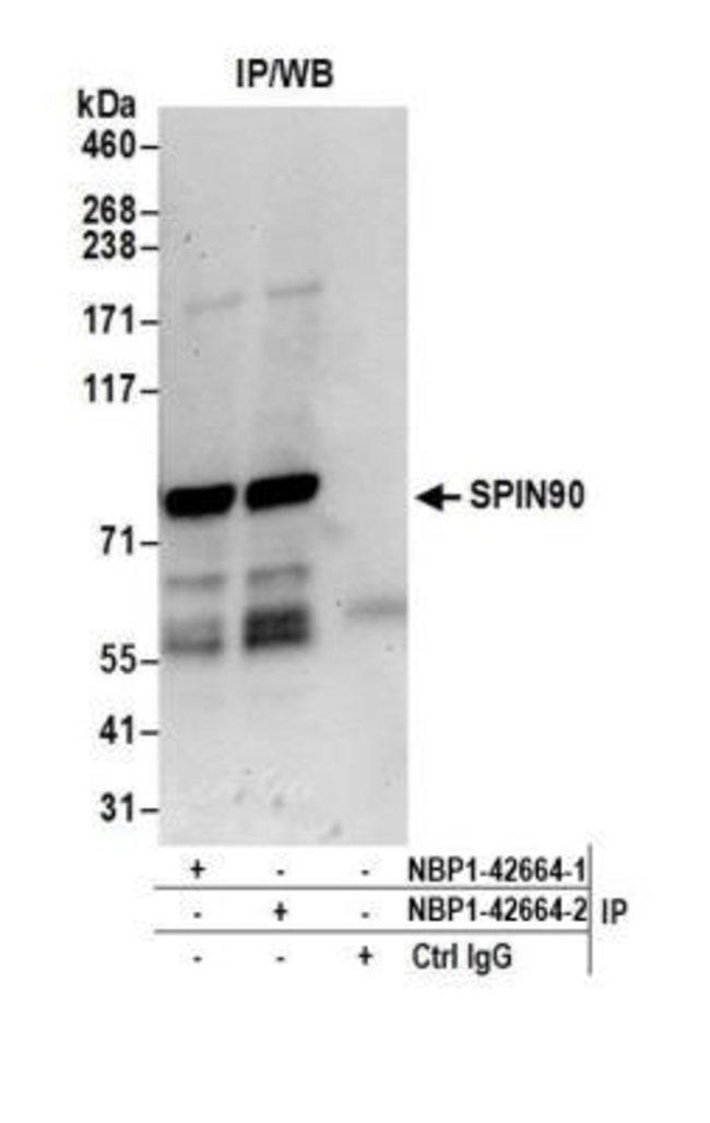 anti-NCKIPSD, Polyclonal, Novus Biologicals 0.1mL; Unlabeled:Life Sciences