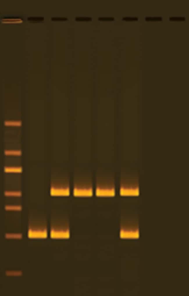 Edvotek PCR-Based DNA Typing :Teaching Supplies:Biotechnology