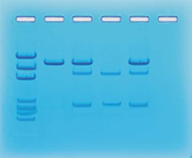 Edvotek™Cancer Gene Detection
