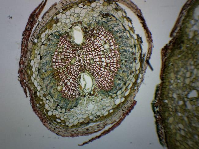 Eisco Pine Life History Composite  Pine Life History Composite:Teaching
