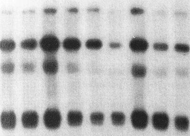 GE Healthcare Amersham Megaprime DNA Labeling System dCTP; 60 reactions:Life