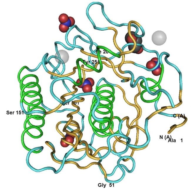 MP BiomedicalsProteinase K Solution, Molecular Biology Grade, 20 mg/mL:Biochemical