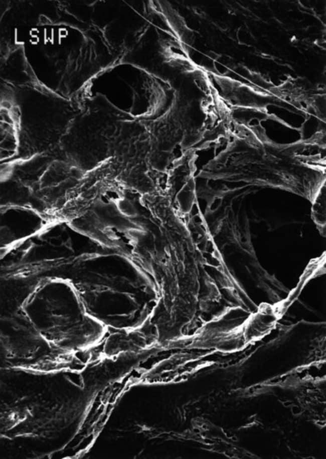 MerckMitex™ Membrane Filters, 5 μm Tamaño de poro de 5,0μm; Liso; Diám.: 90mm MerckMitex™ Membrane Filters, 5 μm