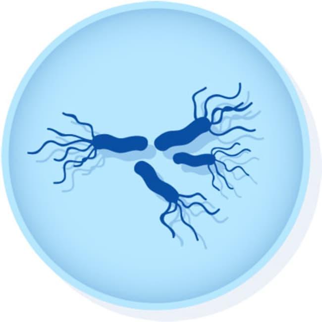 MicrobiologicsEpower Salmonella enterica subsp. enterica serovar Typhimurium