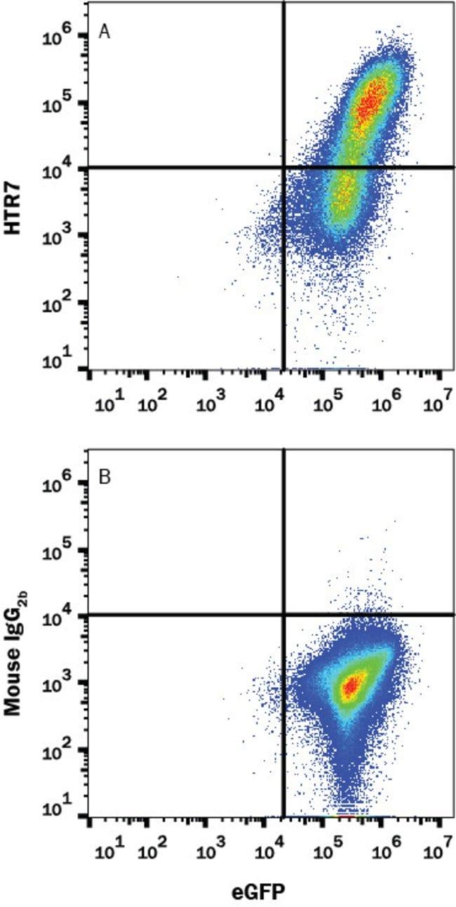 5-HT7, Mouse anti-Human, Clone: 1015322, R:Antibodies:Primary Antibodies