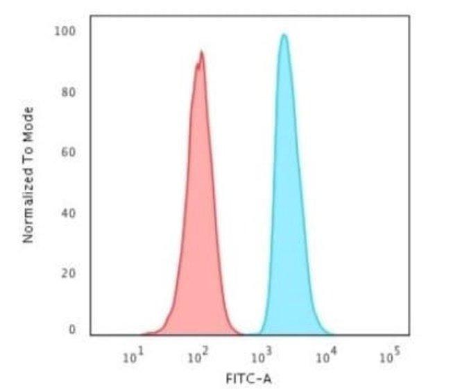 APE Mouse anti-Human, Clone: CPTC-APEX1-2, Novus Biologicals:Antibodies:Primary