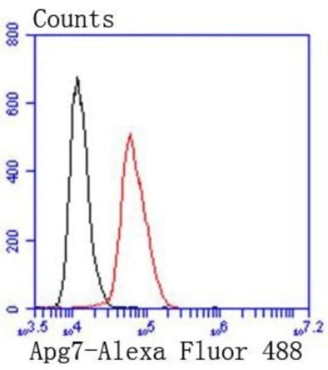 ATG7 Rabbit anti-Human, Clone: SC06-30, Novus Biologicals 100μL:Antibodies
