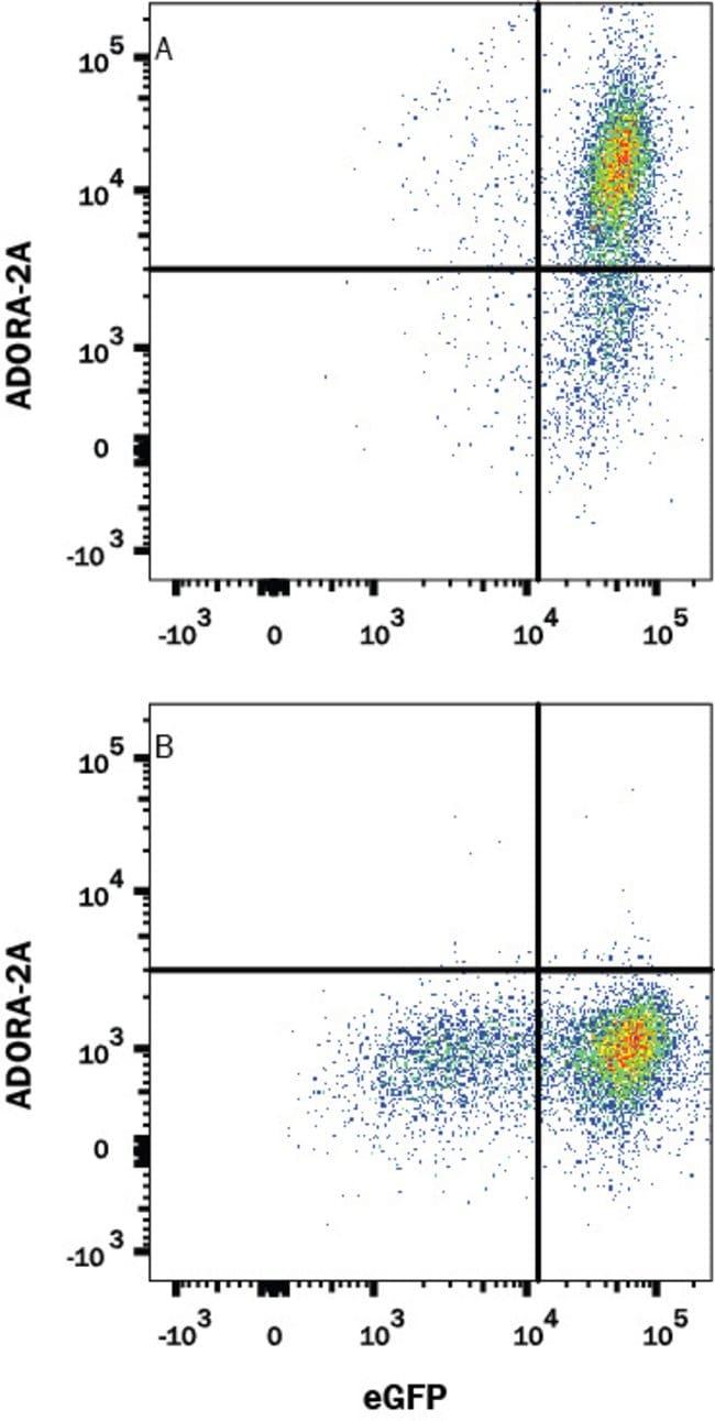 Adenosine A2aR/A2bR, Mouse anti-Human, Clone: 599743, R:Antibodies:Primary