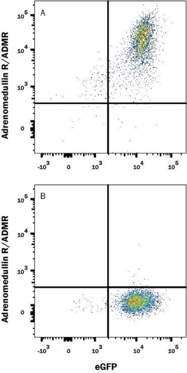 Adrenomedullin R/ADMR/GPR182, Mouse anti-Human, Clone: 528563, R:Antibodies:Primary