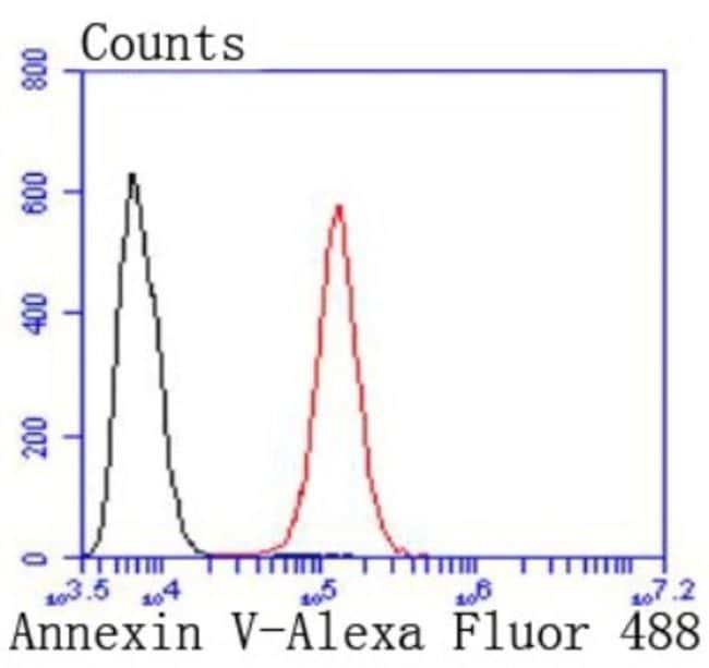 AnnexinV Rabbit anti-Human, Clone: JF50-11, Novus Biologicals 100μL:Antibodies
