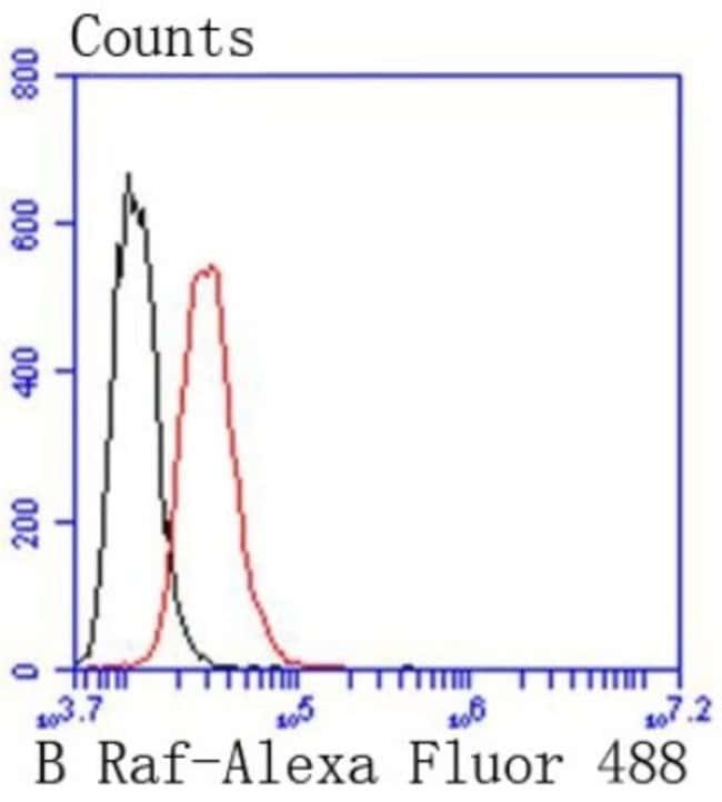 B-Raf Rabbit anti-Human, Clone: SU34-04, Novus Biologicals 100µL