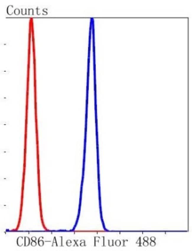 B7-2/CD86 Rabbit anti-Cynomolgus, Clone: SJ20-00, Novus Biologicals 100µL
