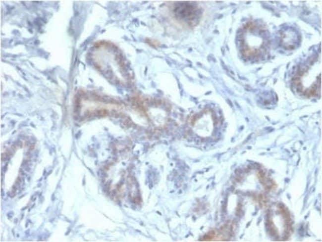 BAP1 Mouse anti-Human, Clone: BAP1/2433, Novus Biologicals:Antibodies:Primary