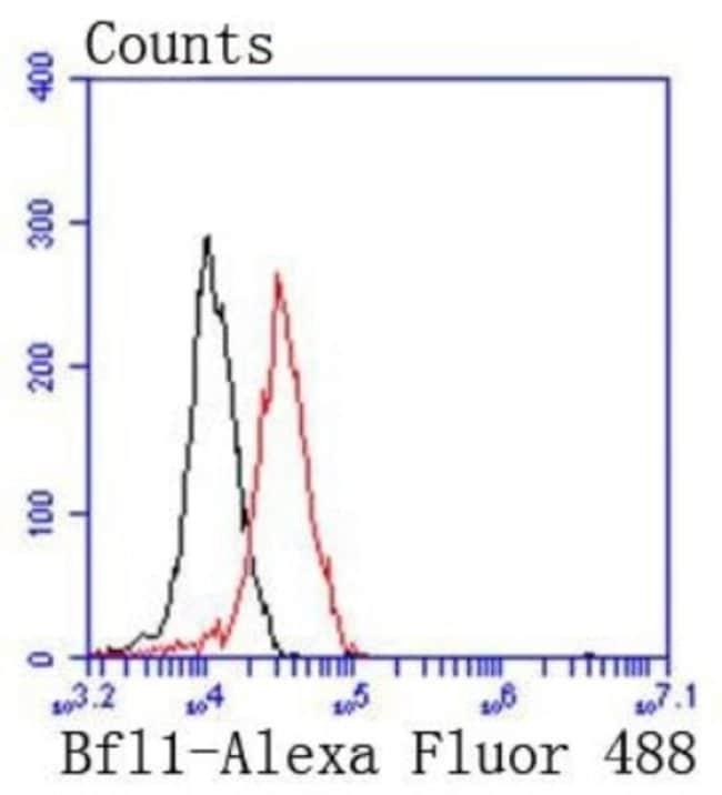 Bcl-2relatedproteinA1 Rabbit anti-Human, Clone: SC05-42, Novus Biologicals