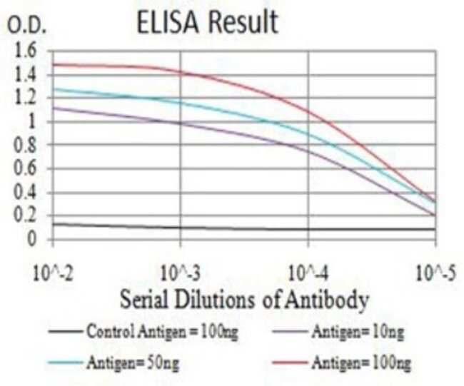 CDC37 Mouse anti-Human, Clone: 6B3B5, Novus Biologicals 0.1 ml; Unconjugated