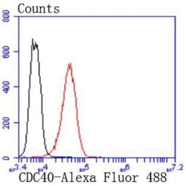 CDC40 Rabbit anti-Human, Clone: SD085-9, Novus Biologicals 100µL