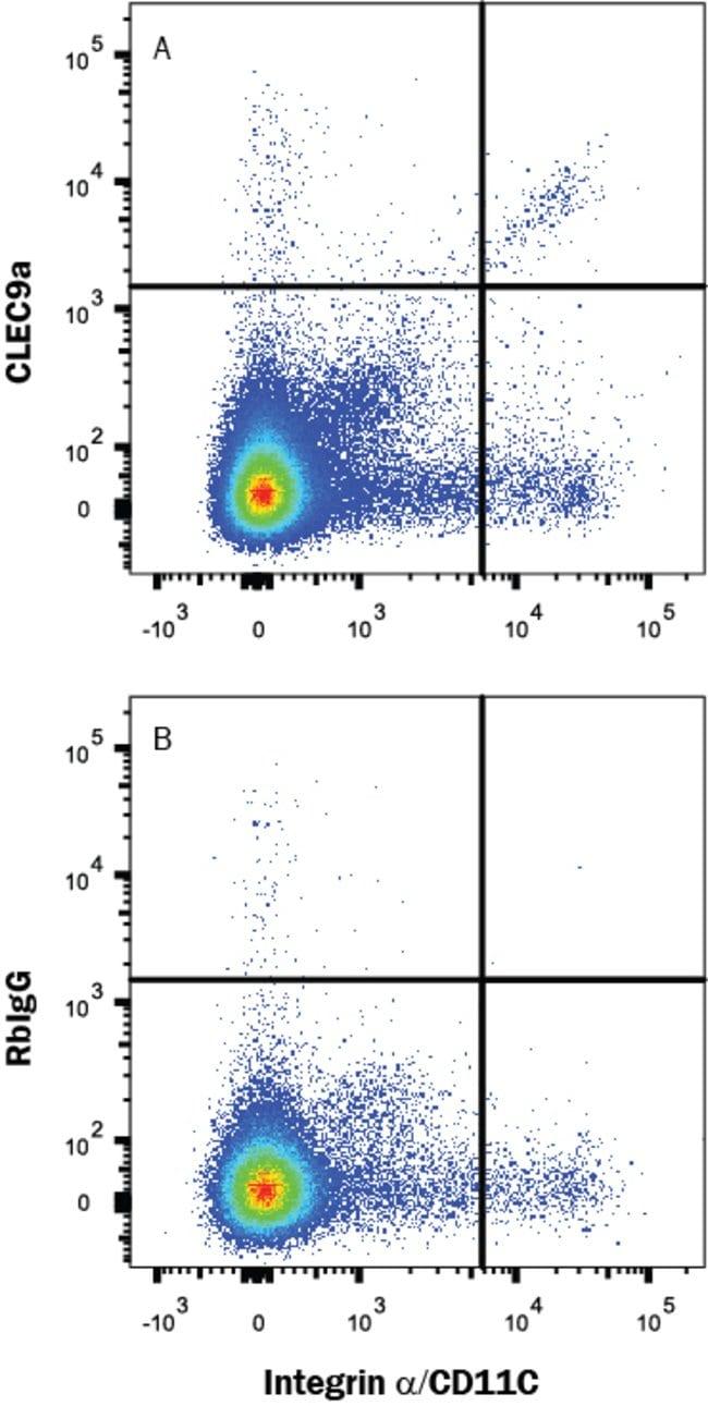 CLEC9a, Rabbit anti-Mouse, Clone: 2456A, R:Antibodies:Primary Antibodies