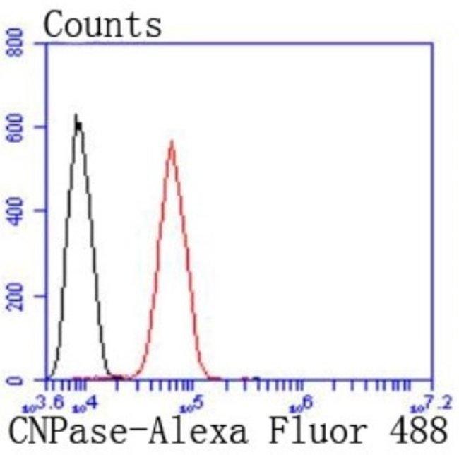 CNPase Rabbit anti-Human, Clone: JF10-25, Novus Biologicals 100µL