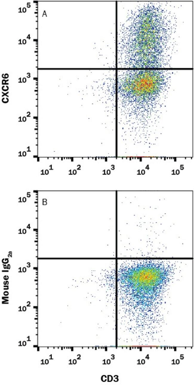 CXCR6, Mouse anti-Human, Clone: 1010910, R:Antibodies:Primary Antibodies