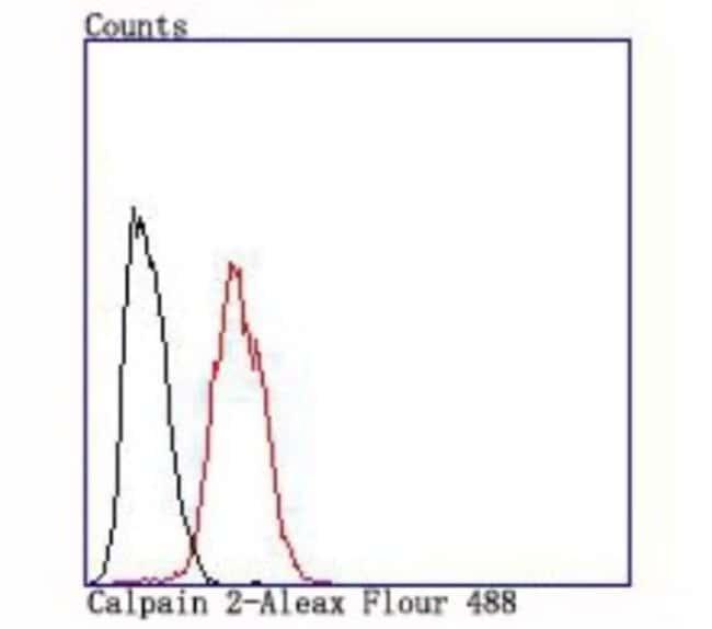 Calpain2 Rabbit anti-Human, Clone: JA43-41, Novus Biologicals 100μL