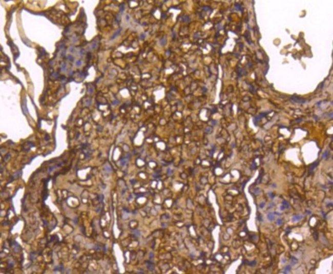 Caspase-1 Rabbit anti-Human, Clone: SU40-07, Novus Biologicals 100μL:Antibodies