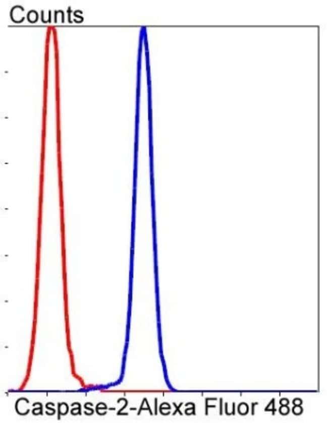 Caspase-2 Rabbit anti-Human, Clone: SR44-01, Novus Biologicals 100µL
